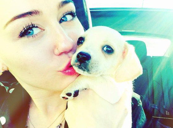 miley cyrus new puppy bean